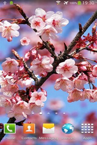 樱花动态壁纸
