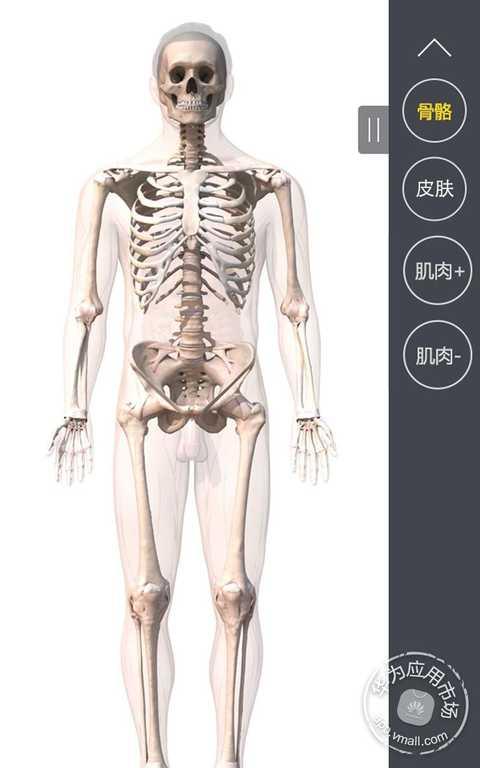 玩生活App|3DBody肌肉解剖免費|APP試玩
