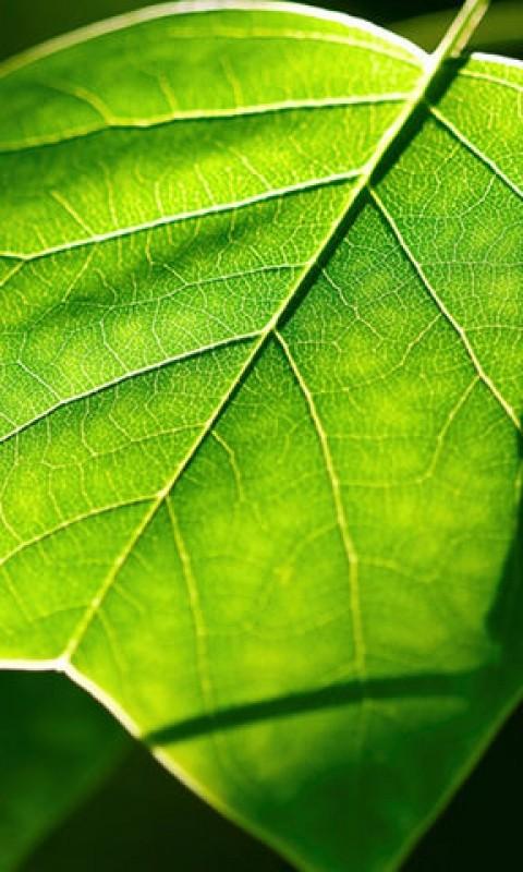 绿色护眼高清壁纸-应用截图
